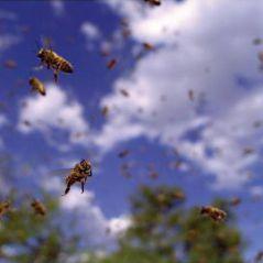 Pollen ... le geste vert de Disney