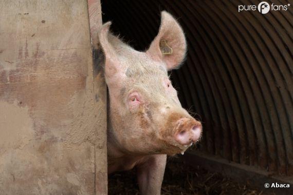 Du porc a été retrouvé dans des produits surgelés étiquetés 100% boeuf chez Waitrose au Royaume-Uni.