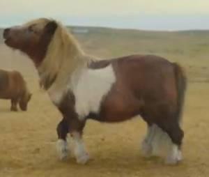 La vidéo du poney qui fait du moonwalk