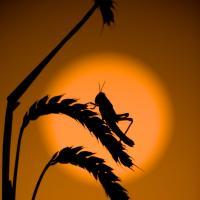 Pour lutter contre la faim dans le monde, mangez des insectes !