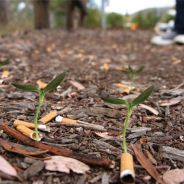 Des mégots de cigarettes transformés en plantes, l'idée écolo fumante !