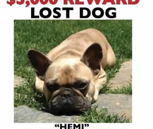 Jeremy Renner : uneoffre de 5 000 dollars pour son chien Hemi