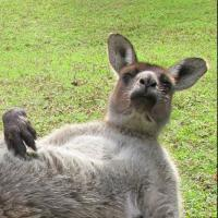"""Un """"kangourou nu"""" censuré sur Facebook mais star du web"""