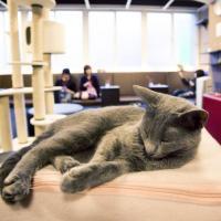Paris : Miaou ! Gros carton pour le premier bar à chats