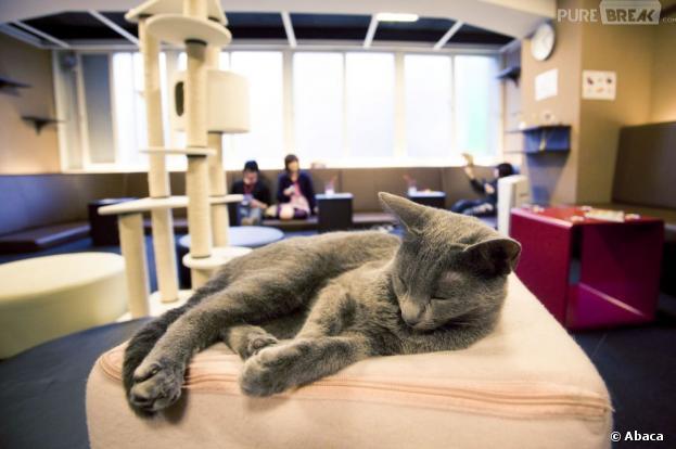 Le premier bar à chats de France - le Café des chats - a ouvert ses portes à Paris le 21 septembre 2013