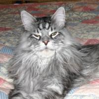 Un chat appelle les secours avec un portable : erreur ou canular ?