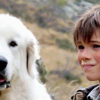 Belle et Sébastien, la série adaptée au cinéma le 18 décembre