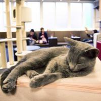 Les textos de mon chat : le tumblr qui révèle le vrai visage de votre chat