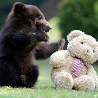 [GIFS] 27 ours qui détrôneront les chats en 2014