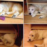 [CUTE] Trop mignon : 25 photos avant/après des animaux qui grandissent