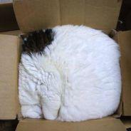 [PHOTOS] 25 preuves que les chats peuvent rentrer dans n'importe quoi