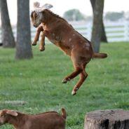 [CUTE] Les sauts les plus délirants des animaux en 15 photos
