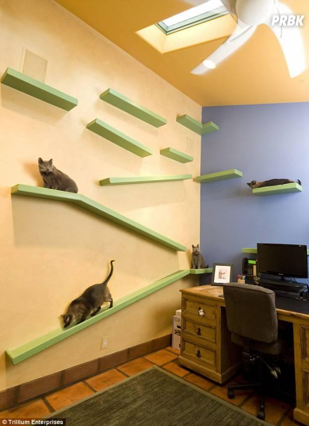 cat house 04