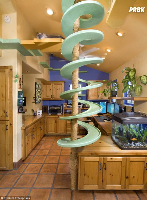 cat house 05