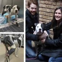 [PHOTOS] Avant / Après : 12 chiens métamorphosés après leur adoption