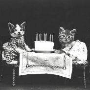 """[CUTE] Voici les premiers """" lolcats """" de l'histoire des chatons"""