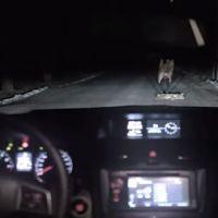 [VIDÉO] Une conductrice percute un chien, la suite de la scène va vous étonner