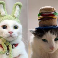 """[CUTE] 15 photos de """"chats-peaux"""" : ces chats qui portent des chapeaux"""