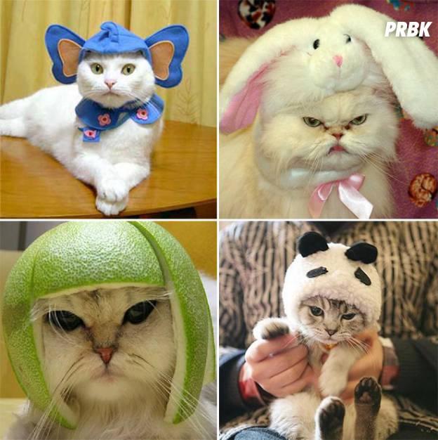 chat peau 04