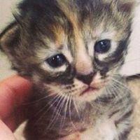 [CUTE] Purrmanently Sad Cat, le chat triste qui déprime le web