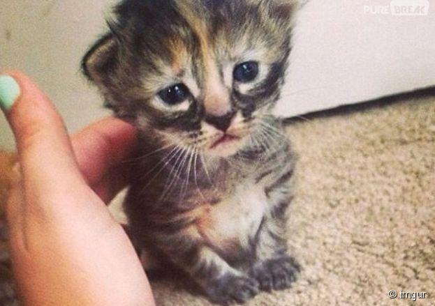 Purrmanently Sad Cat, le chat triste qui déprime le web