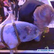 Touche pas à mon poste : Cyril Hanouna et les chroniqueurs face... à un cochon
