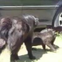 Des chiens stoppent une bagarre de chats : la police canine a encore frappé