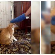 WTF : embêtez ce chat et il devient une vraie machine de guerre enragée !