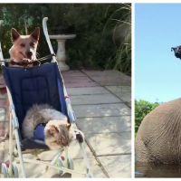 Trop cute : des amitiés improbables (et adorables) entre animaux d'espèces différentes