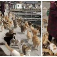 Aoshima, l'île des chats : le paradis sur Terre existe !