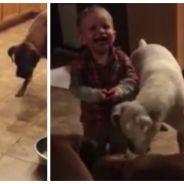 Trop cute : quand un bébé de 20 mois trolle trois chiens