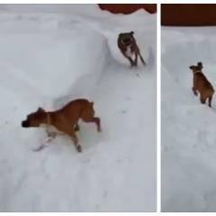 Hilarant : quand un vieux chien trolle un petit chiot