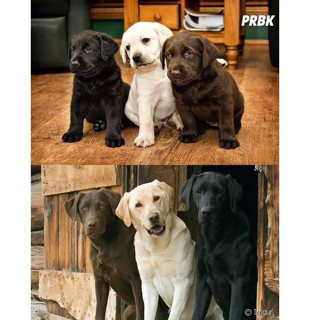 Trois chiens amis de toujours.