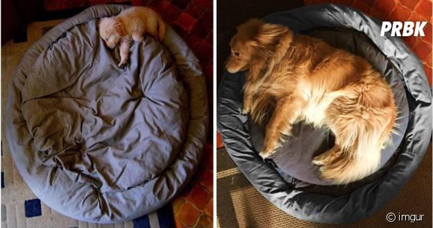 Un an d'écart entre les deux photos.