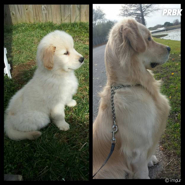Le même chien à deux ans d'écart.