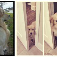 10 photos avant/après de chiots trop mignons devenus de grands et beaux chiens !