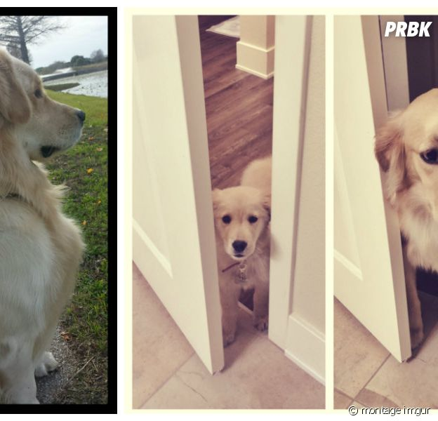 Des chiens petits... puis devenus grands !