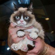 Urban Outfitters : la chaîne de prêt-à-porter offre des chats à ses clients