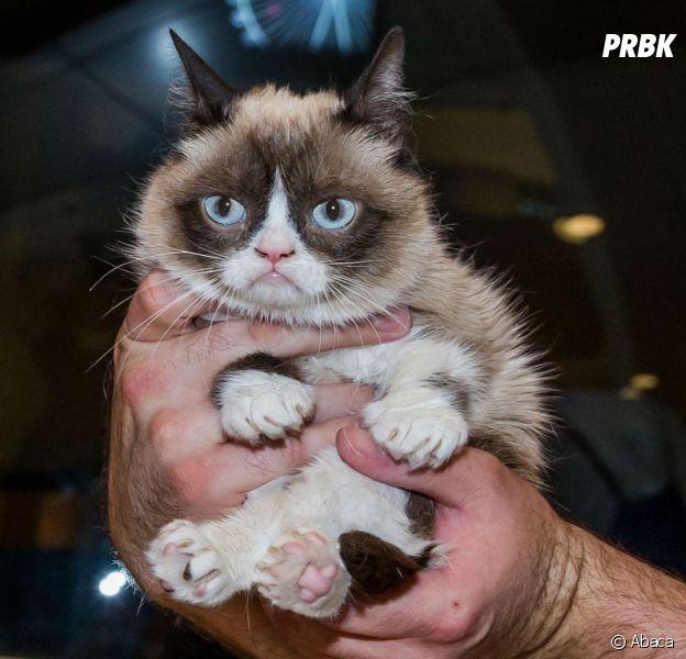 Urban Outfitters : des chats offerts à ses clients
