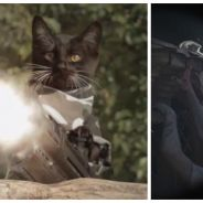 On en rêvait, Internet l'a fait : CHATS vs ZOMBIES !