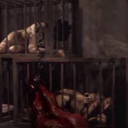 Sia : sa campagne choc et dérangeante contre la cruauté envers les animaux