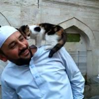 Un imam accueille les chats errants dans sa mosquée et fait craquer le web