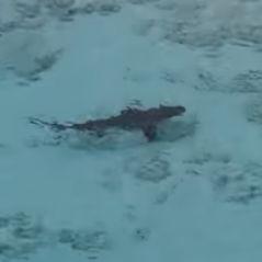 Trop pressé de se baigner, cet enfant plonge dans une mer remplie de requins