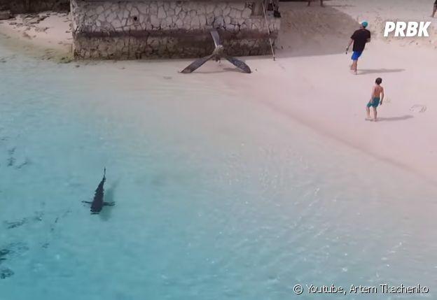Un petit garçon se jette dans une eau... remplie de requins !