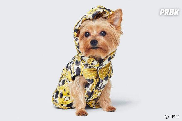 Habillez votre chien en Moschino x H&M.