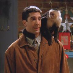 Friends : David Schwimmer (Ross) n'aimait pas le singe Marcel qui était une Diva sur le tournage