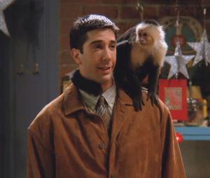 Friends : David Schwimmer (Ross) détestait tourner avec Marcel qui était une Diva sur le tournage