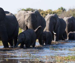 La bande-annonce de Eléphants
