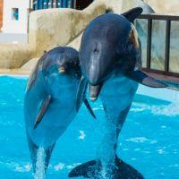 Le parc Astérix ferme son delphinarium : avenir des dauphins, maltraitance... Le directeur réagit
