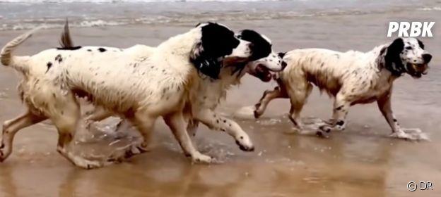 Les chiens de Tilda Swinton lauréats de la Palm Dog Wamiz 2021